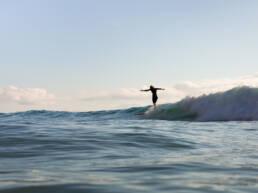 surffaus-aallot